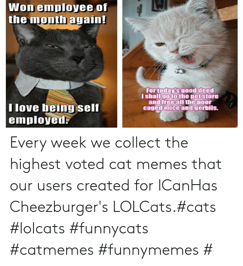 Cats, Love, and Memes: Won employee of  the month again!  For today's good deed  I shallgo to the pet store  and free all the poor  caged mice and gerbils.  T love being self  employed Every week we collect the highest voted cat memes that our users created for ICanHas Cheezburger's LOLCats.#cats #lolcats #funnycats #catmemes #funnymemes #