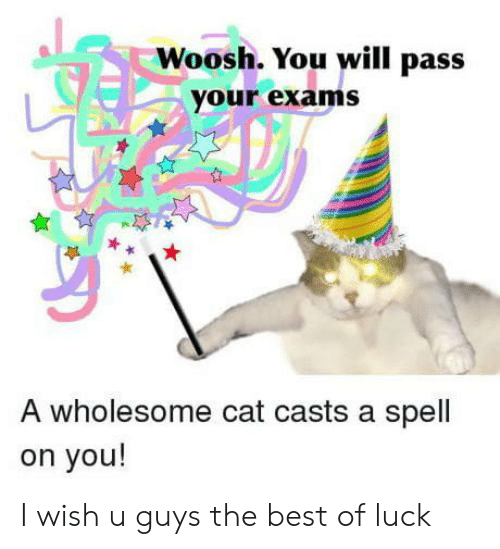 Best Of Luck: Woosh. You will pass  your exams  A wholesome cat casts a spell  on you! I wish u guys the best of luck