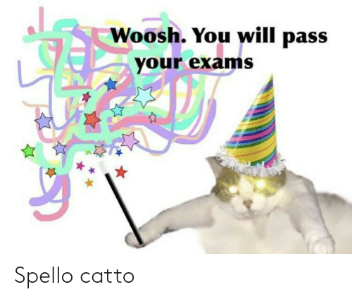 Dank Memes, Will, and You: Woosh. You will pass  your exams Spello catto