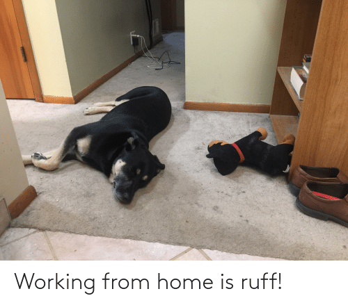 Home Is: Working from home is ruff!