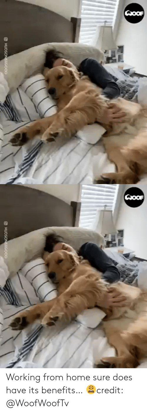 Https Www Facebook Com: Working from home sure does have its benefits… 😩credit: @WoofWoofTv