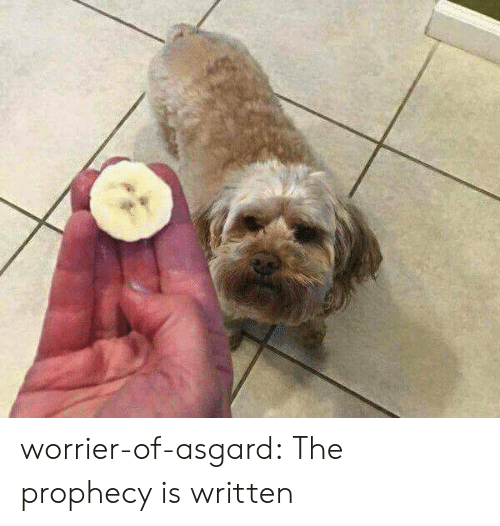 The Prophecy: worrier-of-asgard:  The prophecy is written