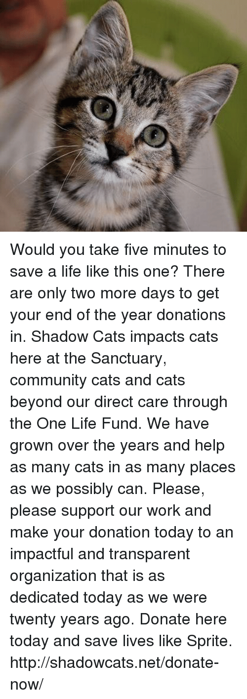 Transparencies: Would you take five minutes to save a life like this one?   There are only two more days to get your end of the year donations in.  Shadow Cats impacts cats here at the Sanctuary, community cats and cats beyond our direct care through the One Life Fund.  We have grown over the years and help as many cats in as many places as we possibly can.   Please, please support our work and make your donation today to an impactful and transparent organization that is as dedicated today as we were twenty years ago. Donate here today and save lives like Sprite. http://shadowcats.net/donate-now/