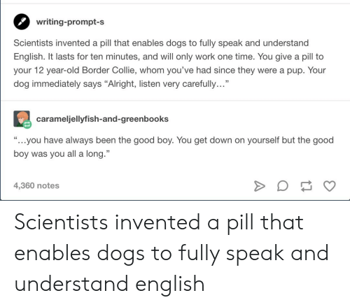 """12 Year: writing-prompt-s  Scientists invented a pill that enables dogs to fully speak and understand  English. It lasts for ten minutes, and will only work one time. You give a pill to  your 12 year-old Border Collie, whom you've had since they were a pup. Your  dog immediately says """"Alright, listen very carefully...""""  carameljellyfish-and-greenbooks  """"...you have always been the good boy. You get down on yourself but the good  boy was you all a long.""""  4,360 notes Scientists invented a pill that enables dogs to fully speak and understand english"""