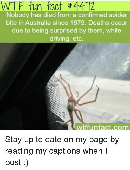 Driving, Memes, and Spider: WTF fun fact #4412  Nobody has died from a confirmed spider  bite in Australia since 1979. Deaths occur  due to being surprised by them, while  driving, etc.  wtffun fact, com Stay up to date on my page by reading my captions when I post :)