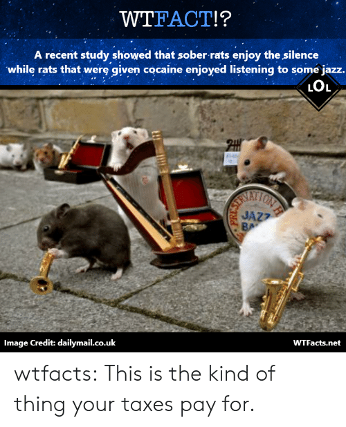 Wtfacts: WTFACT!?  A recent study showed that sober rats enjoy the silence  while rats that werę given cocaine enjoyed listening to some jazz.  LOL  ATI  JAZ?  Image Credit: dailymail.co.uk  WTFacts.net wtfacts:  This is the kind of thing your taxes pay for.