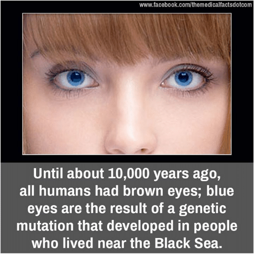 Brown Eye: www.facebook.com/themedicalfactsdotcom  Until about 10,000 years ago,  all humans had brown eyes, blue  eyes are the result of a genetic  mutation that developed in people  who lived near the Black Sea.