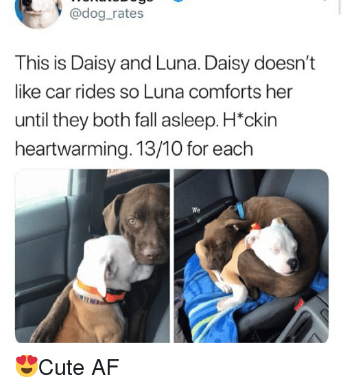"Af, Fall, and Memes: y @dog_rates  This is Daisy and Luna. Daisy doesn't  like car rides so Luna comforts her  until they both fall asleep. H""ckin  heartwarming. 13/10 for each  We 😍Cute AF"