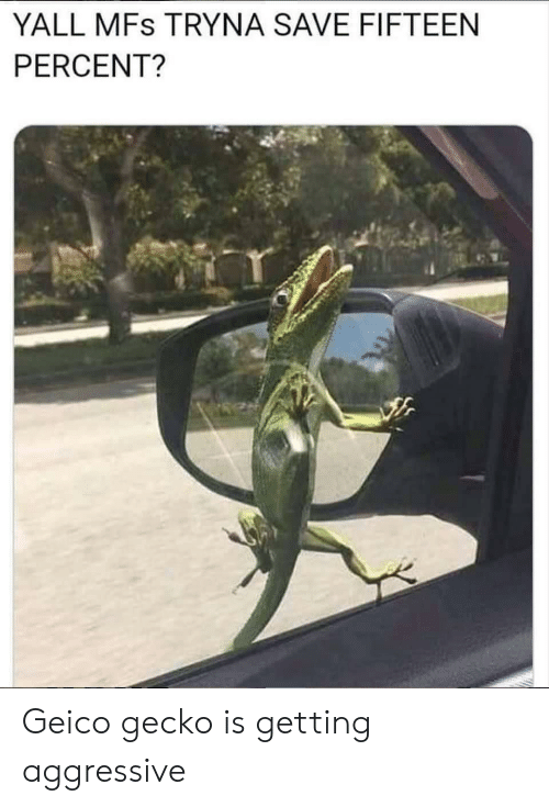 geico: YALL MFs TRYNA SAVE FIFTEEN  PERCENT? Geico gecko is getting aggressive