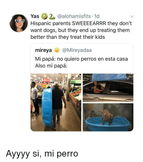 Dogs, Parents, and Kids: Yas @alohamisfits 1d  Hispanic parents SWEEEEARRR they don't  want dogs, but they end up treating them  better than they treat their kids  mireya@Mireyadaa  Mi papá: no quiero perros en esta casa  Also mi papá: Ayyyy si, mi perro