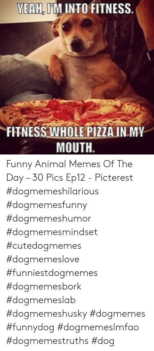 Funny, Memes, and Pizza: YEAH, I'M INTO FITNESS  FITNESS WHOLE PIZZA.INMY  MOUTH Funny Animal Memes Of The Day – 30 Pics Ep12 - Picterest #dogmemeshilarious    #dogmemesfunny #dogmemeshumor #dogmemesmindset #cutedogmemes #dogmemeslove    #funniestdogmemes #dogmemesbork #dogmemeslab #dogmemeshusky #dogmemes    #funnydog #dogmemeslmfao #dogmemestruths #dog