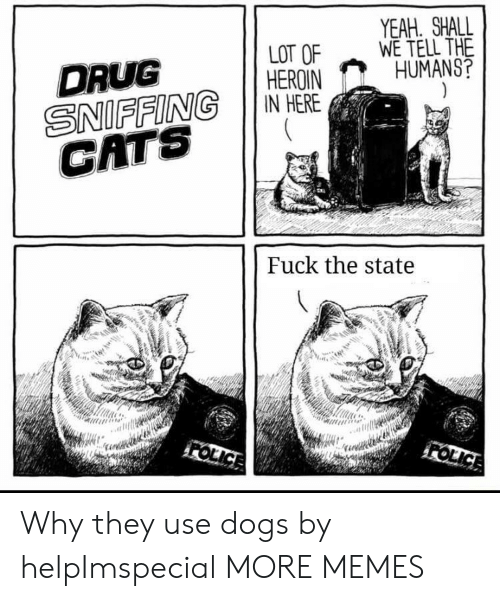 The State: YEAH. SHALL  WE TELL THE  HUMANS?  LOT OF  HEROIN  IN HERE  DRUG  SNIFFING  CATS  Fuck the state  FOLICE  FOLICE Why they use dogs by helpImspecial MORE MEMES