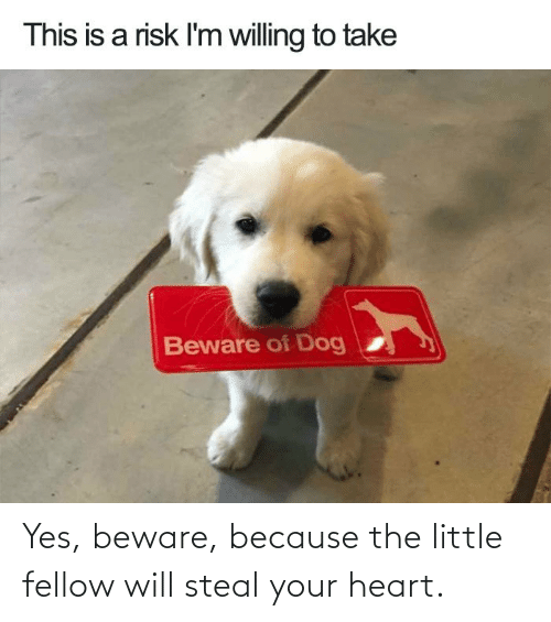 beware: Yes, beware, because the little fellow will steal your heart.