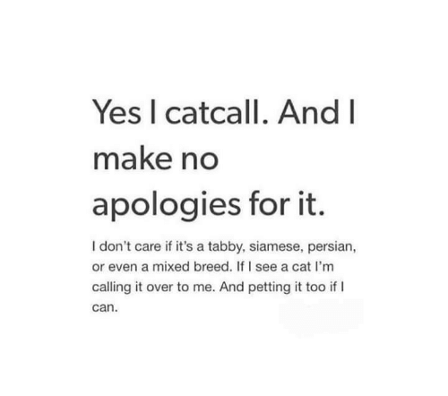 Persian, Siamese, and Cat: Yes I catcall. And  make no  apologies for it.  I don't care if it's a tabby, siamese, persian,  or even a mixed breed. If I see a cat I'm  calling it over to me. And petting it too if l  can.