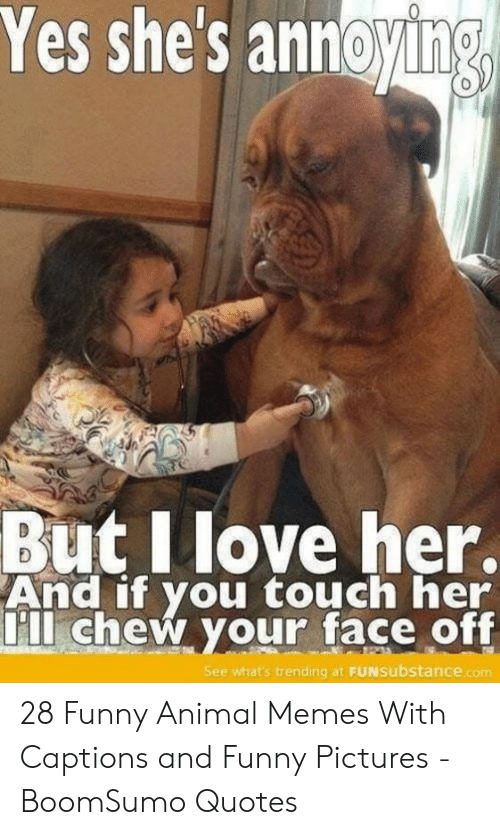 Funny, Memes, and Animal: Yes shes annoying  0  But Ilove her.  And if you touch her  ll chew your face off  See what's trending at FUNsubstance.com 28 Funny Animal Memes With Captions and Funny Pictures - BoomSumo Quotes