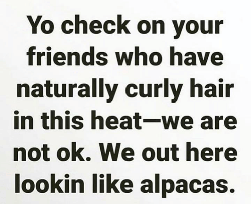 We Out: Yo check on your  friends who have  naturally curly hair  in this heat-we are  not ok. We out here  lookin like alpacas.