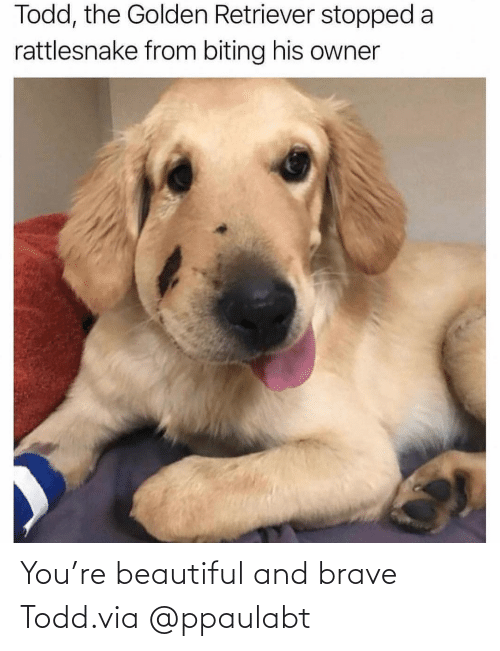 todd: You're beautiful and brave Todd.via @ppaulabt