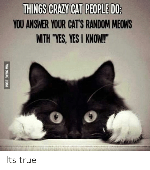 "Yesis: YOU ANSWER YOUR CAT'S RANDOM MEOWS  WITH ""YES, YESI KNOW!  0 o Its true"