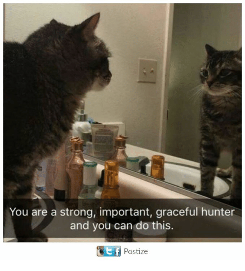 Importanter: You are a strong, important, graceful hunter  and you can do this.  Ef