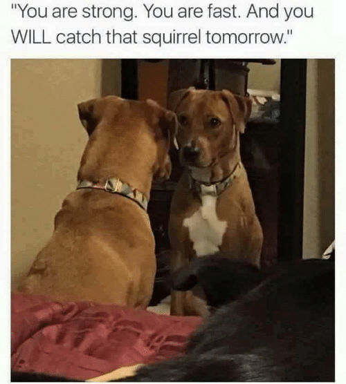 """Memes, Squirrel, and Tomorrow: """"You are strong. You are fast. And you  WILL catch that squirrel tomorrow."""""""