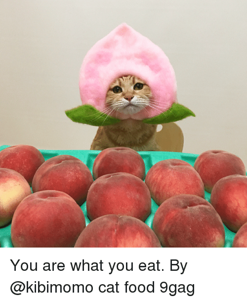 cat food: You are what you eat. By @kibimomo cat food 9gag