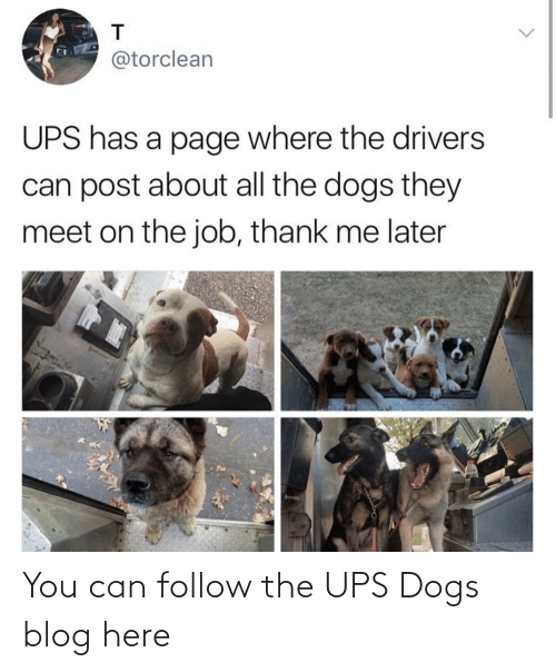 Here: You can follow the UPS Dogs blog here