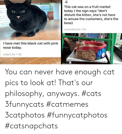 Cats: You can never have enough cat pics to look at! That's our philosophy, anyways. #cats 3funnycats #catmemes 3catphotos #funnycatphotos #catsnapchats