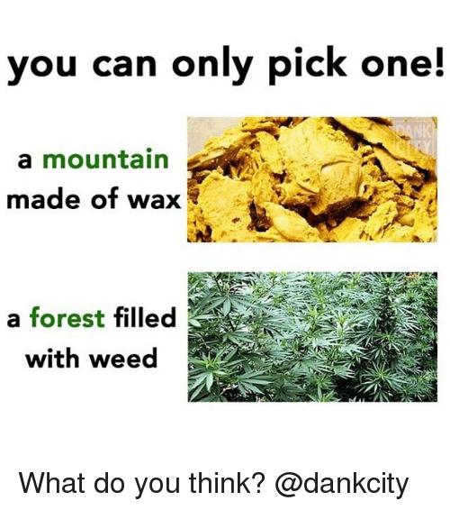 Weed, Marijuana, and Forest: you can only pick one!  a mountain  made of wax  a forest filled  with weed What do you think? @dankcity