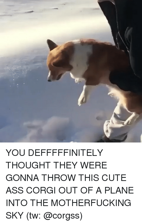 Ass, Corgi, and Cute: YOU DEFFFFFINITELY THOUGHT THEY WERE GONNA THROW THIS CUTE ASS CORGI OUT OF A PLANE INTO THE MOTHERFUCKING SKY (tw: @corgss)