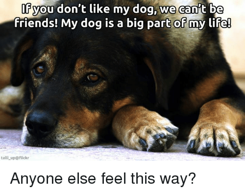 Anyoning: you don't like my dog, we can't be  friends! My dog is a big part of my life!  talli up flickr Anyone else feel this way?