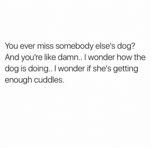 cuddles: You ever miss somebody else's dog?  And vou're like damn.. I wonder how the  dog is doing.. I wonder if she's getting  enough cuddles