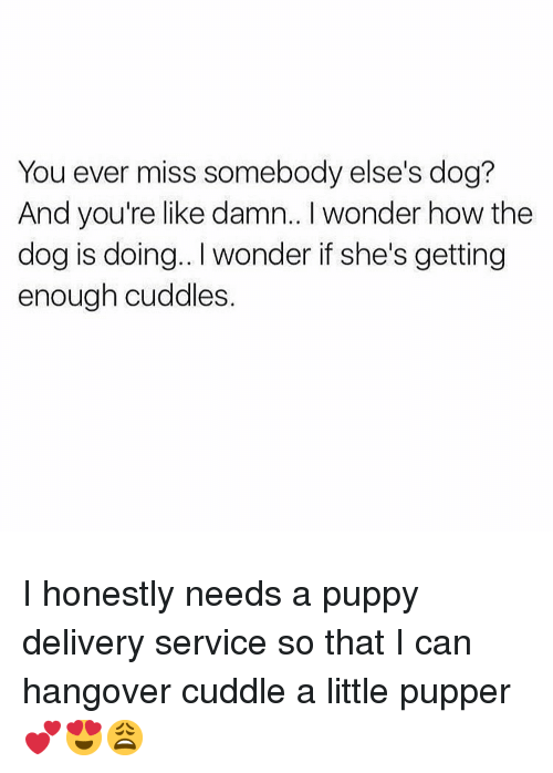 Memes, Hangover, and Puppy: You ever miss somebody else's dog?  And you're like damn.. I wonder how the  dog is doing.. I wonder if she's getting  enough cuddles. I honestly needs a puppy delivery service so that I can hangover cuddle a little pupper 💕😍😩