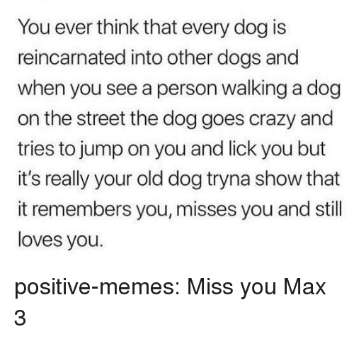 Crazy, Dogs, and Memes: You ever think that every dog is  reincarnated into other dogs and  when you see a person walking a dog  on the street the dog goes crazy and  tries to jump on you and lick you but  it's really your old dog tryna show that  it remembers you, misses you and still  loves you. positive-memes:  Miss you Max 3