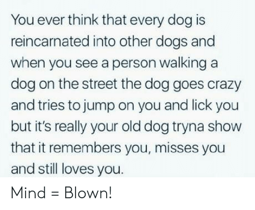 Crazy, Dogs, and Old: You ever think that every dog is  reincarnated into other dogs and  when you see a person walking a  dog on the street the dog goes crazy  and tries to jump on you and lick you  but it's really your old dog tryna show  that it remembers you, misses you  and still loves you. Mind = Blown!