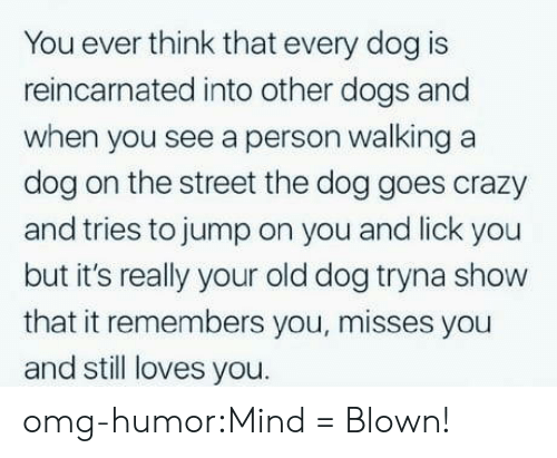 Crazy, Dogs, and Omg: You ever think that every dog is  reincarnated into other dogs and  when you see a person walking a  dog on the street the dog goes crazy  and tries to jump on you and lick you  but it's really your old dog tryna show  that it remembers you, misses you  and still loves you. omg-humor:Mind = Blown!