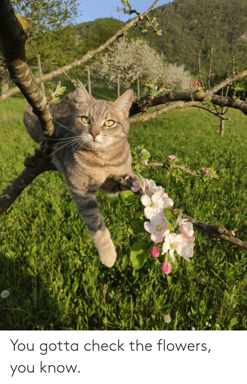 Flowers: You gotta check the flowers, you know.