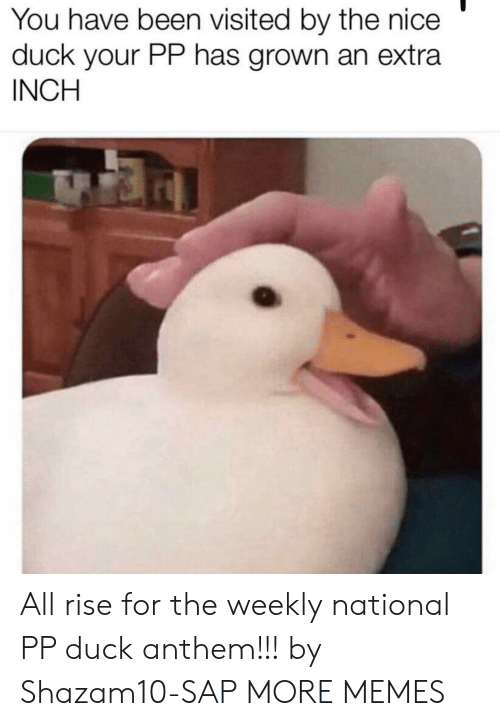 Dank, Memes, and Target: You have been visited by the nice  duck your PP has grown an extra  INCH All rise for the weekly national PP duck anthem!!! by Shazam10-SAP MORE MEMES