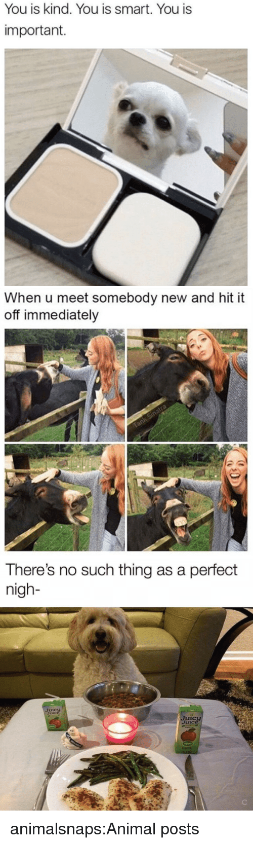 Target, Tumblr, and Animal: You is kind. You is smart. You is  important.   When u meet somebody new and hit it  off immediately   There's no such thing as a perfect  nigh- animalsnaps:Animal posts