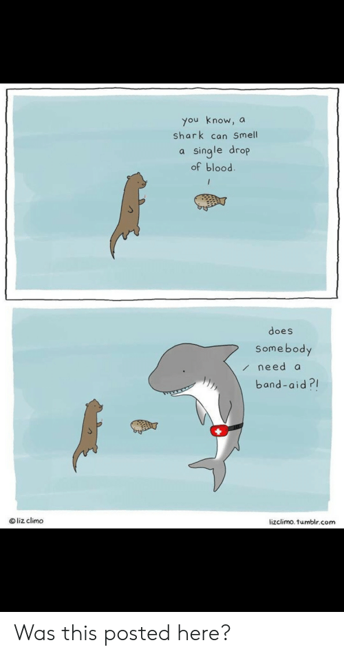 Lizclimo Tumblr: you know, a  shark can Smell  single drop  of blood.  /  does  Somebody  need a  band-aid?  Oliz climo  lizclimo. tumblr.com Was this posted here?