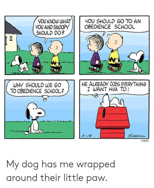 i want him: YOU KNOW WHAT  YOU ANDSNOOPY  SHOULD DO?  I 40U SHOULD GO TO AN  OBEDIENCE SCHOOL  1づ  HE ALREADY DOES EVERYTHING  WHY SHOULD WE GO  TO OBEDIENCE SCHOOL?  I WANT HIM TO!  3-/8  PNTS My dog has me wrapped around their little paw.