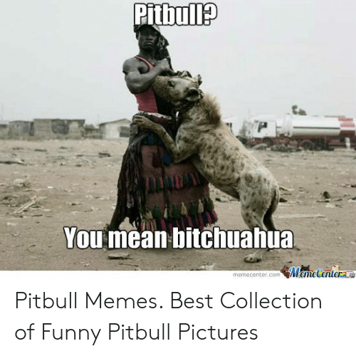Funny Pitbull Pictures: You mean bitchuahua  memecenter.com MemeCenter Pitbull Memes. Best Collection of Funny Pitbull Pictures