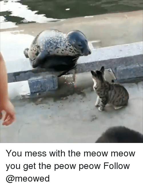 Memes, 🤖, and You: You mess with the meow meow you get the peow peow Follow @meowed