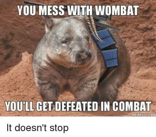 wombats: YOU MESS WITH WOMBAT  YOU LL GET DEFEATED IN COMBAT  MEMEFUE COM It doesn't stop