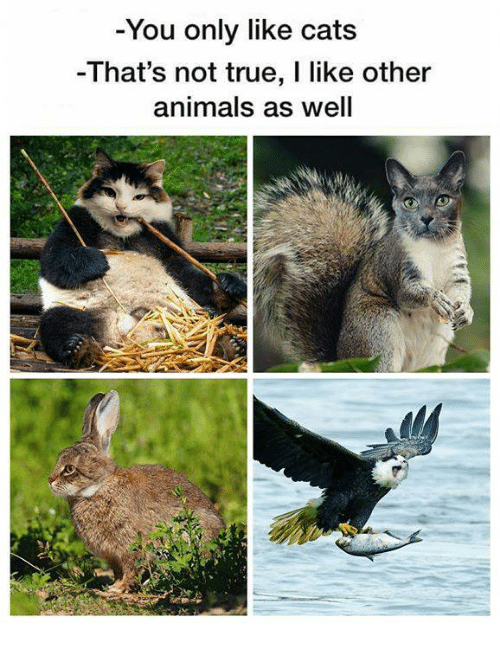 Animals, Cats, and Memes: You only like cats  -That's not true, I like other  animals as well