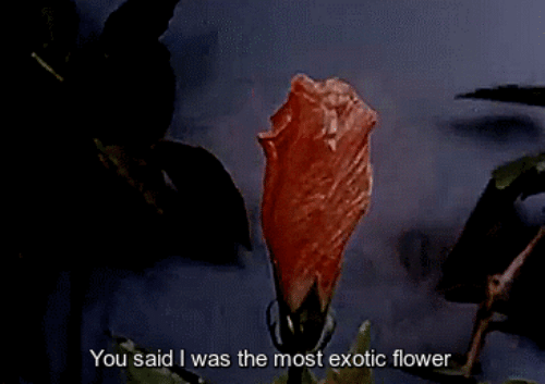 Flower, You, and Exotic: You said I was the most exotic flower