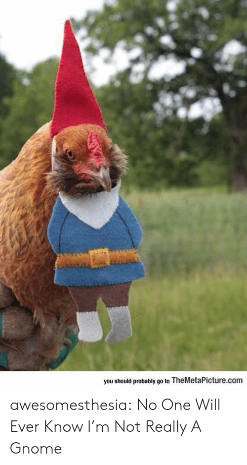 Tumblr, Blog, and Com: you should probably go to TheMetaPicture.com awesomesthesia:  No One Will Ever Know I'm Not Really A Gnome