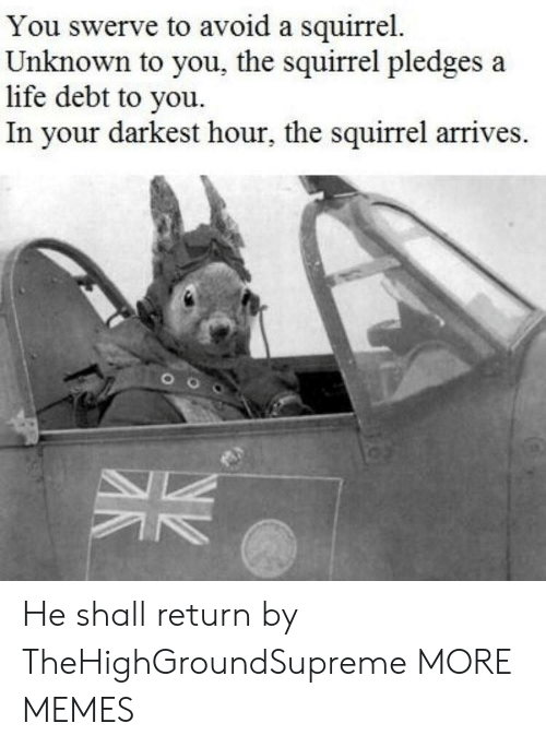Dank, Life, and Memes: You swerve to avoid a squirrel.  Unknown to you, the squirrel pledges a  life debt to you.  In your darkest hour, the squirrel arrives. He shall return by TheHighGroundSupreme MORE MEMES