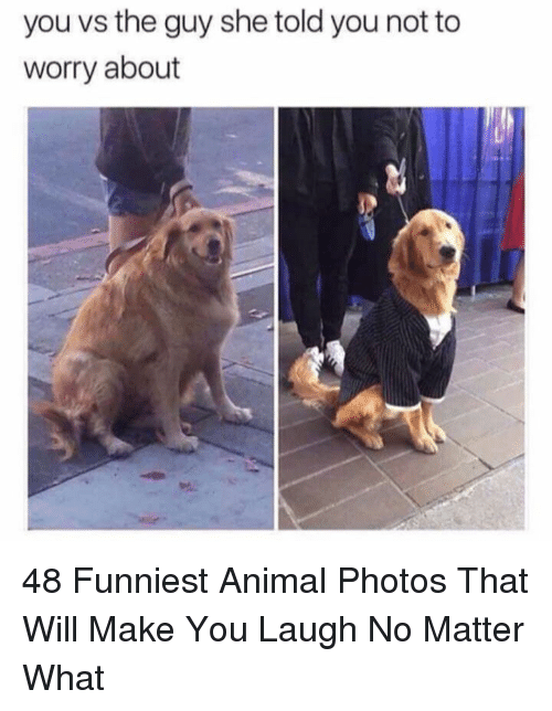 Animal, Photos, and Will: you vs the guy she told you not to  worry about 48 Funniest Animal Photos That Will Make You Laugh No Matter What