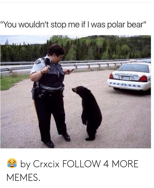 "Dank, Memes, and Target: ""You wouldn't stop me if I was polar bear""  POICE  7 DLA 😂 by Crxcix FOLLOW 4 MORE MEMES."