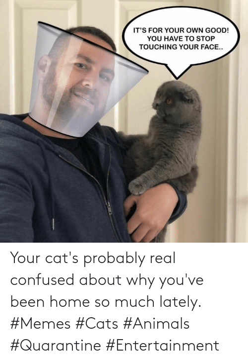 Cats: Your cat's probably real confused about why you've been home so much lately. #Memes #Cats #Animals #Quarantine #Entertainment